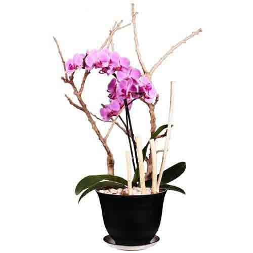 Sophisticated Presentation of Purple Orchids