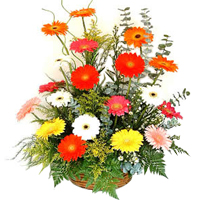 Clustered Love Delight Gerberas Basket