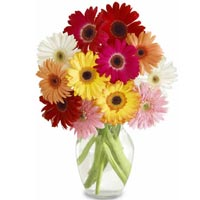 Mixed Gerberas in Vase